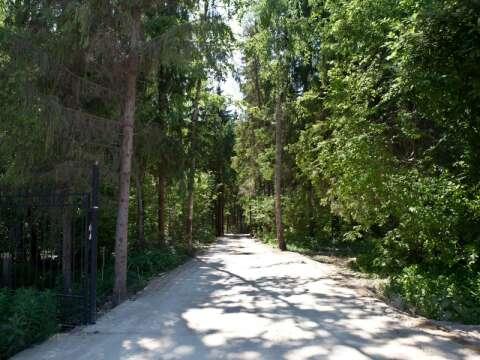 Лесные зори